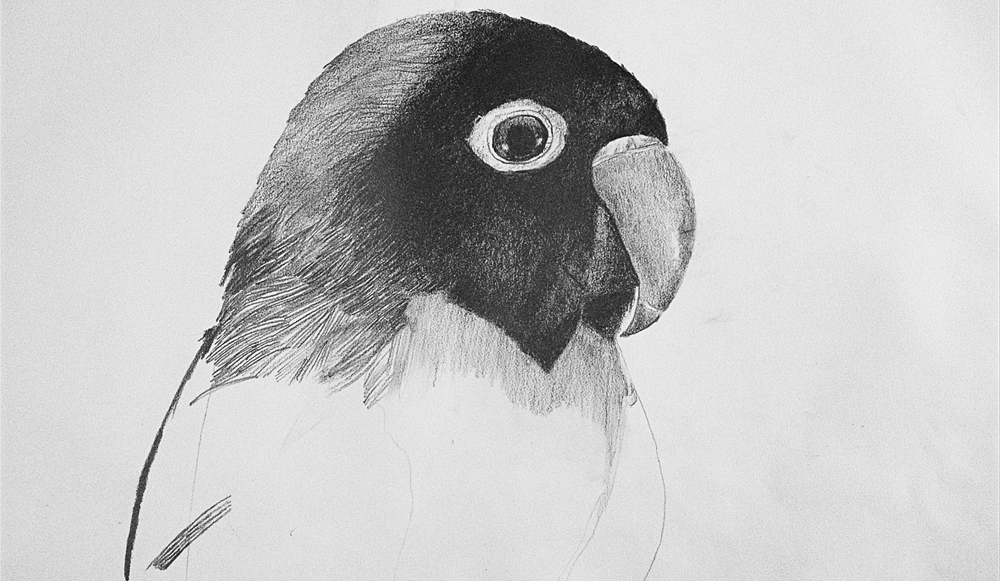 Bird Drawing by Amy Pickwick